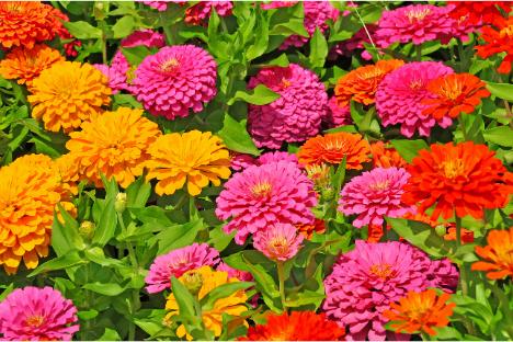 Pet-Safe Plants